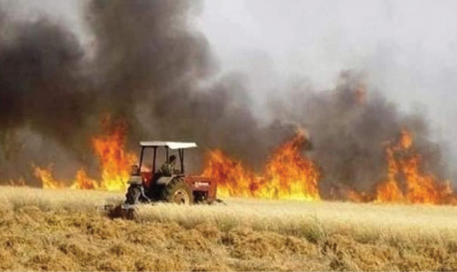 الزراعة النيابية: حرق الحقول مؤامرة على العراق لتدمير إقتصاده