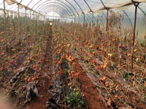 الزراعة النيابية تتحدث عن حالة مقصودة للاضرار بالمنتجات المحلية