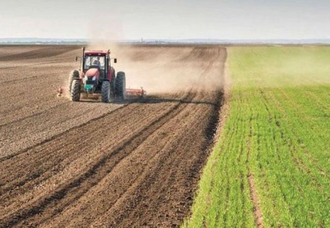 الزراعة تحدد شروط استيراد المواد العلفية من قبل القطاع الخاص