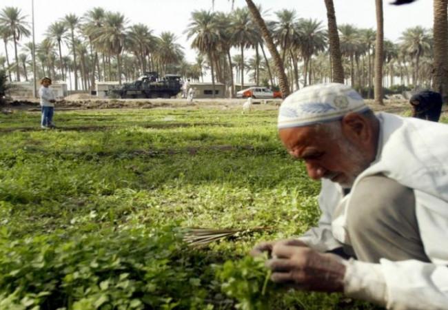 الزراعة: سداد مستحقات الفلاحين قبل إقرار الخطة الشتوية