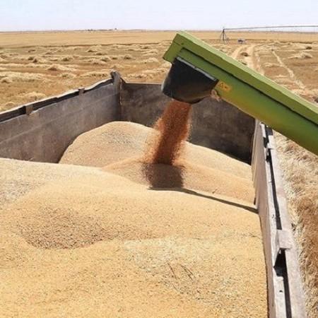 بلومبيرغ: العراق حقق الاكتفاء الذاتي من القمح للموسم الثالث على التوالي