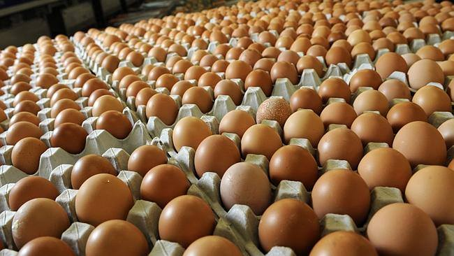 زراعة الرصافة تعلن تسويق 43 مليون بيضة ودجاجة خلال حزيران الحالي