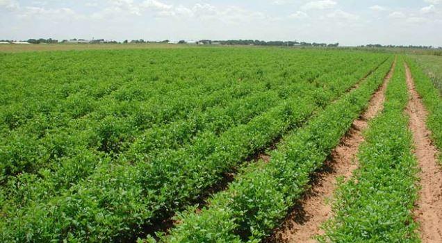 الزراعة : ارتفاع نسب أنتاج الحنطة في محافظة واسط