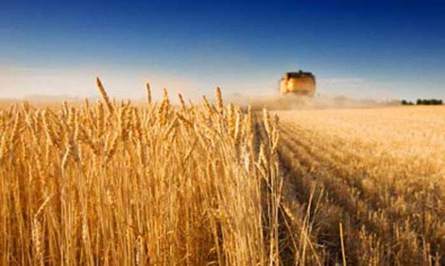 زراعة النجف تطالب وزارة الزراعة بتسهيل اجراءات استلام محصول الحنطة من فلاحي المحافظة