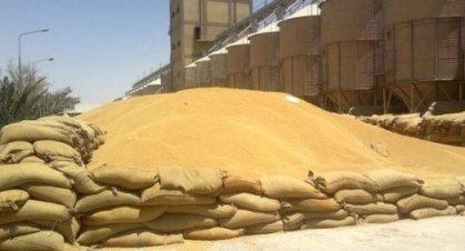 التجارة:الكميات المسوقة من الحنطة المحلية في محافظات الوسط والجنوب بلغت 370 ألف طن