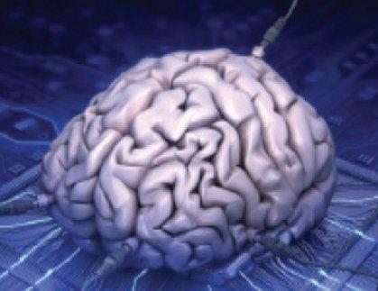 علماء ينتجون «دماغاً بشرياً» شبه مكتمل