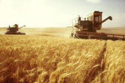 وزارة الزراعة تواصل عملية فحص وتصديق البذور استعداداً  للموسم  الزراعي القادم