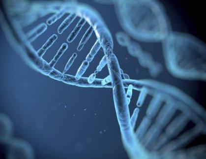 الجينات تحدد مستوى الذكاء