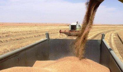 التجارة تتسلم نحو مليوني طن من الحنطة المحلية وواسط تتصدر المسوقين