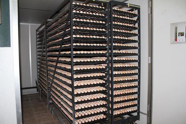 الزراعة : انتاج اكثر من ( 101) مليون بيضة في كربلاء المقدسة خلال النصف الثاني من العام الحالي