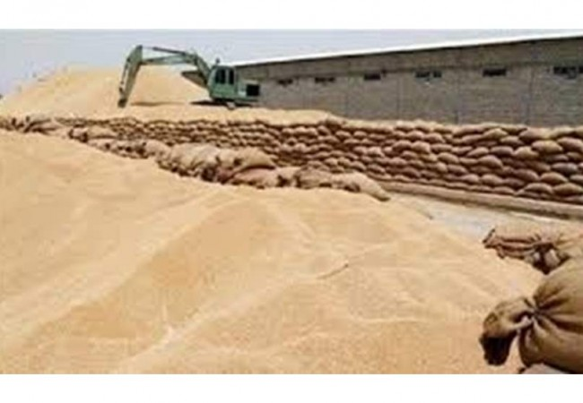 التجارة تعلن حصيلة جديدة عن كميات الحنطة المسوقة