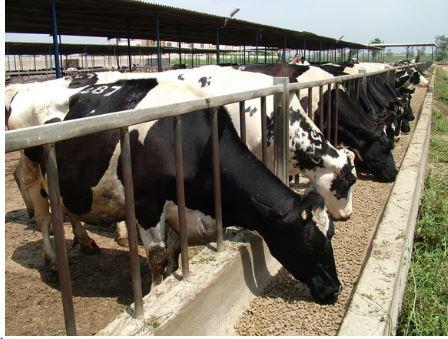 رئاسة البرلمان: تراجع الثروة الحيوانية في العراق يتطلب حلولاً سريعة لها