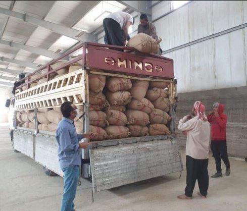 التجارة تجهز المواطنين بالرز المحلي المنتج هذا العام في المجارش الحكومية