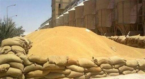 تسويق 170 ألف طن من الحنطة والشعير في ذي قار