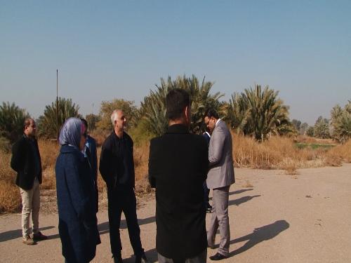 إعادة إحياء غابة بغداد
