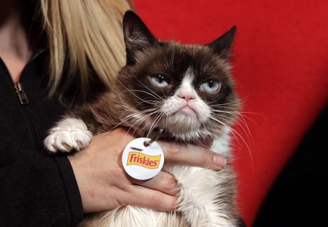 القطة العابسة تترك ثروة بمئة مليون دولار