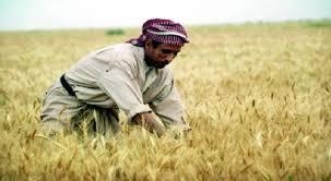 عضو في الزراعة النيابية يطالب بتأجيل مطالبة الفلاحين بمستحقات القروض الزراعية