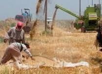الديوانية تطالب الحكومة المركزية ببناء مخازن لاستيعاب الكميات الكبيرة من محاصيل الحنطة والشعير والشلب