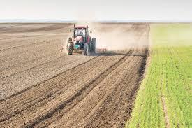 الزراعة النيابية تعلن موقفها من قرار الوزارة في تصدير فائض منتجاتها