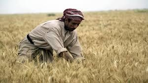 الزراعة: ارتفاع صرف الدولار سيؤثر سلباً لفترة مؤقتة