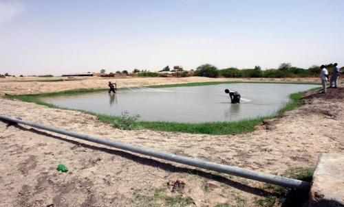 الزراعة تستأنف منح اجازات تربية الاسماك بالاحواض الترابية