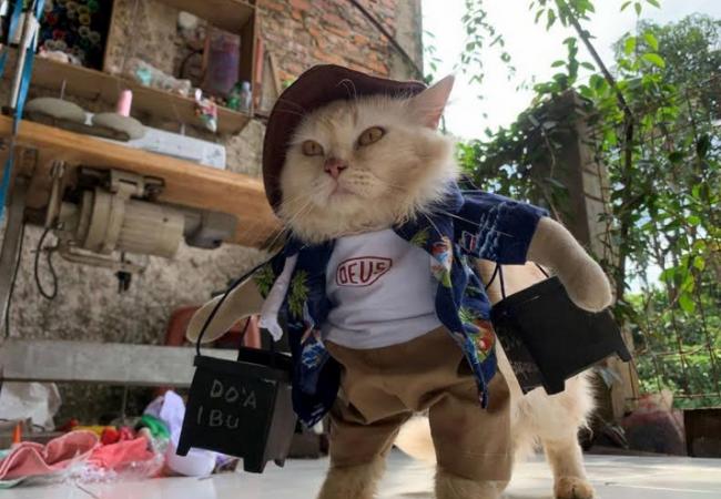 مدرس إندونيسي يصمم أزياء للقطط