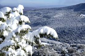 الثلوج تبهج الجزائريين وتكشف لهم عن حيوان نادر